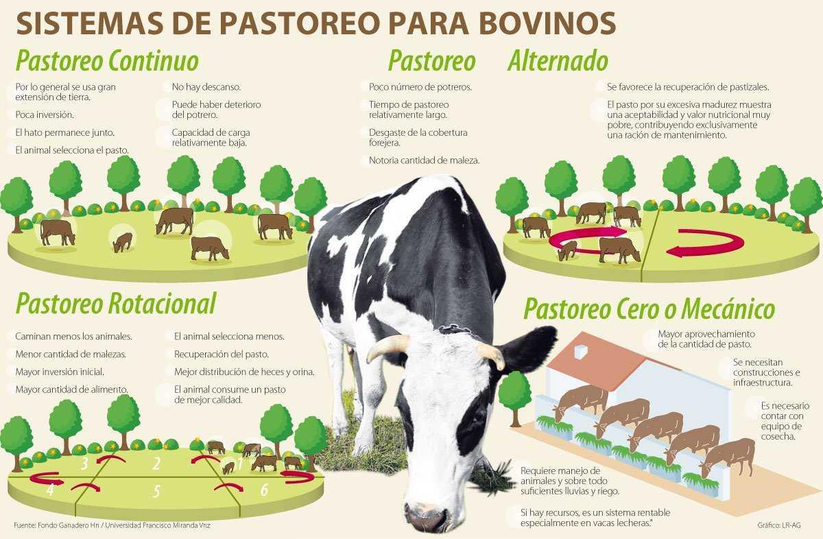 pastoreo0612-1000