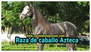 Raza de caballo Azteca