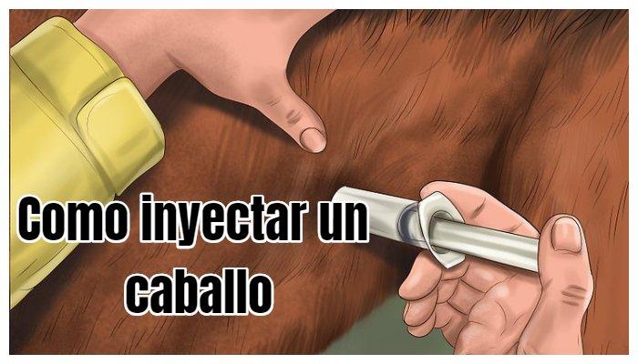 como inyectar un caballo