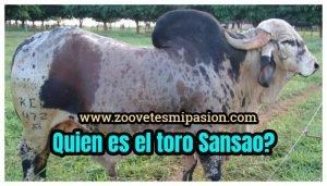 Quien es el toro Sansao_