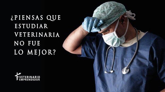 Por que estudiar medicina veterinaria