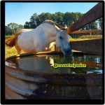 consumo de agua del caballo