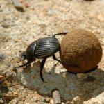 Beneficios de los organismos del suelo