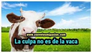 la culpa no es la vaca