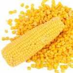 Maiz como alimento para animales