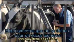 Medicamentos que no se deben usar en vacas lecheras