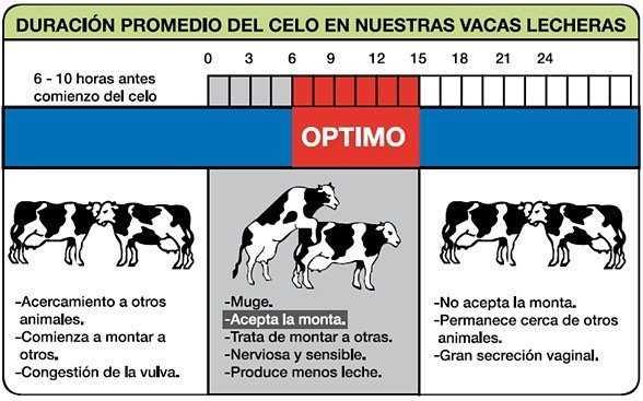 inseminación artificial del bovino