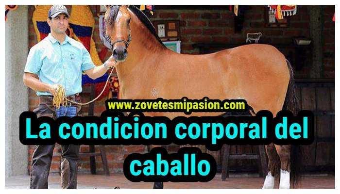 condicion corporal del caballo