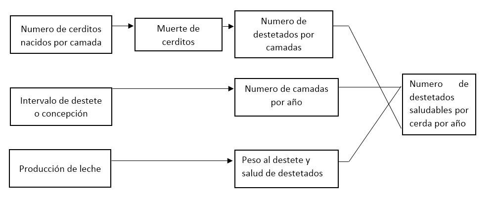 fases de alimentacion para cerdos