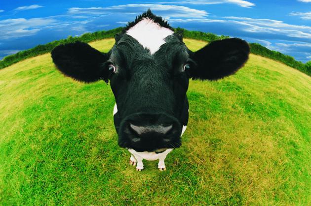 Causas de in-fertilidad en vacas