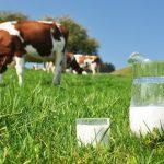 Como analizar la Curva de lactancia
