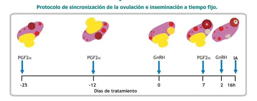 protocolo de Sincronozacion de celos en vacas
