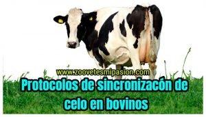 protocolos de sincronizacion de celo en bovinos