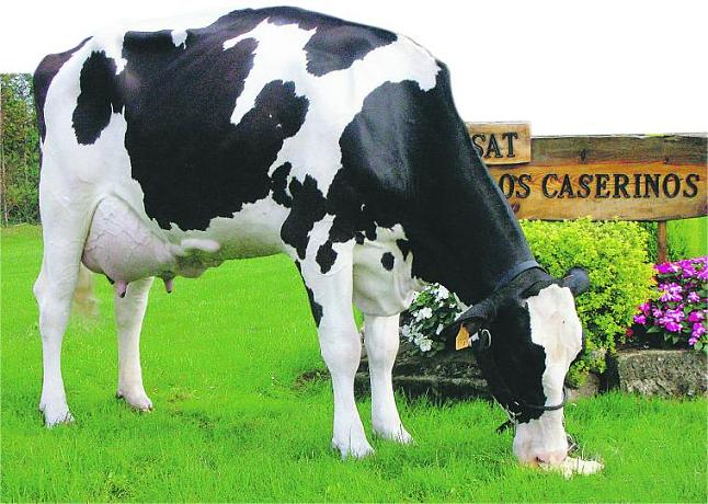 Estrategias De Monitoreo De La Vaca En Transición