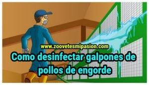 Como desinfectar galpones de pollos de engorde
