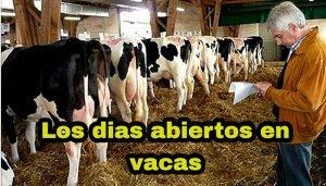 Dias abiertos en el ganado