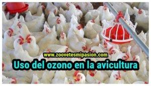 Uso del ozono en la avicultura