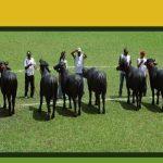 Libro Juzgamiento, Clasificación y Selección de Ganado Bubalino