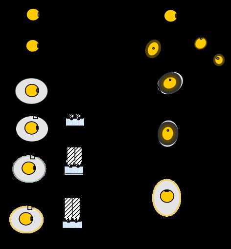 cuantos huevos pone una gallina