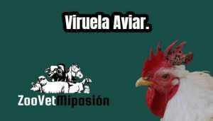 Viruela Aviar.
