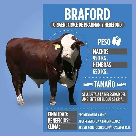 raza Braford