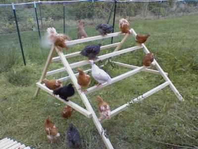 perchas en escalera para gallinas