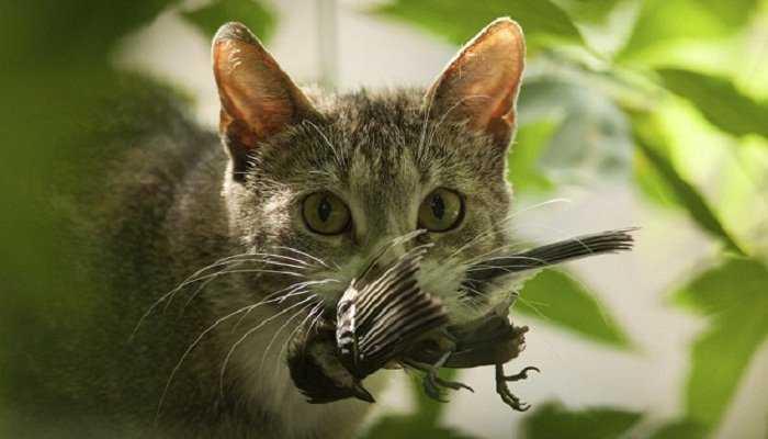 Los gatos llevan animales-muertos