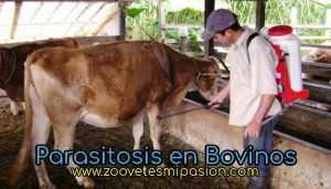 Parasitosis en Bovinos