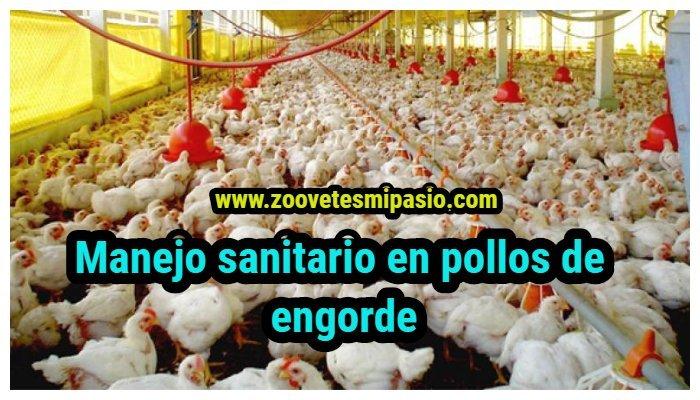 Manejo sanitario en pollos de engorde