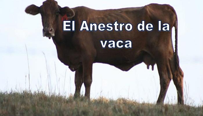 Anestro de la vaca