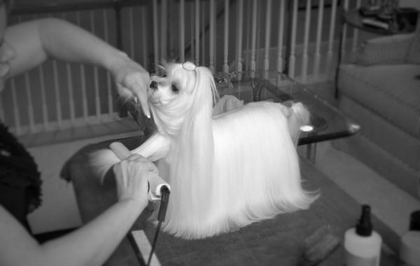 cepillado del pelo de perros