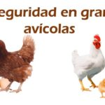 Manejo de la Bioseguridad en aves
