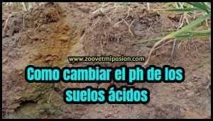 suelos acidos