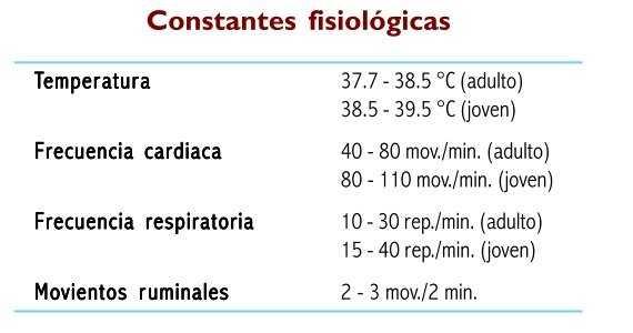 Constantes fisiologicas de los bovinos