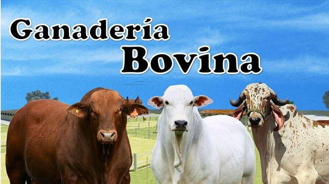 Ganadería bovina, su definición y todos sus sistemas