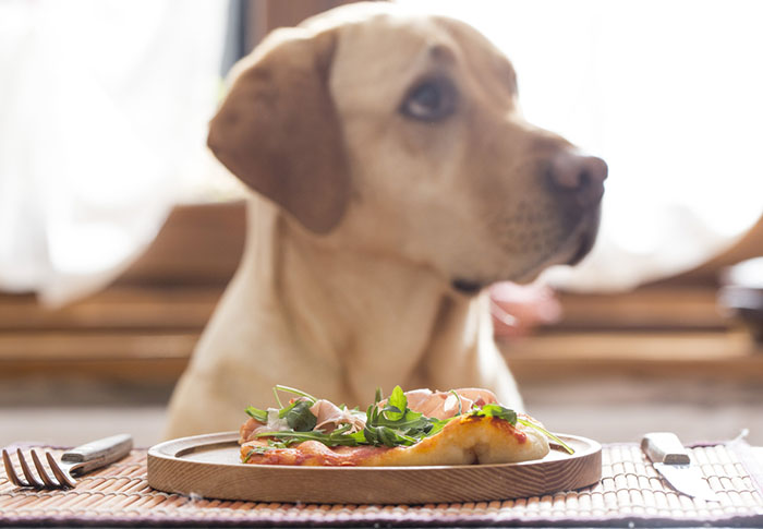 Intolerancia Dietetica en Perros y Gatos