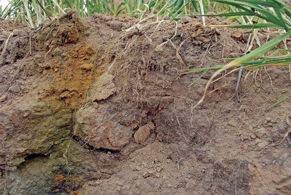 Como cambiar el ph de los suelos ácidos