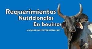 Requerimietos nutricionales en bovinos