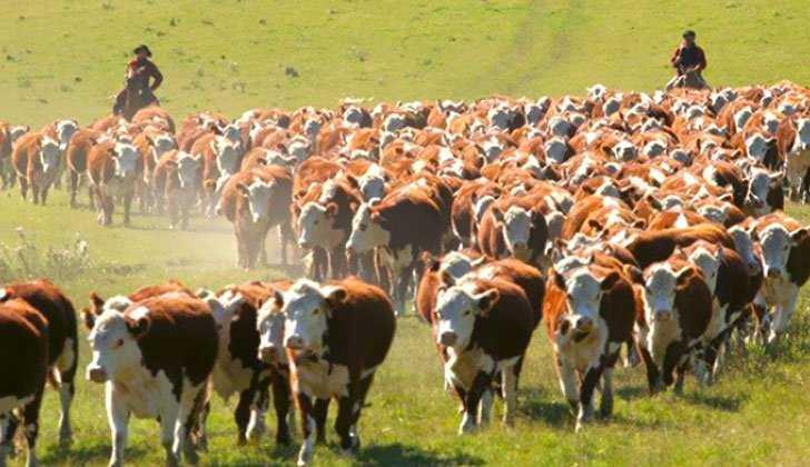 4 claves para ganar tiempo con tu granja de vacas nodrizas