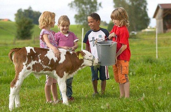 Consumo de leche de la ternera