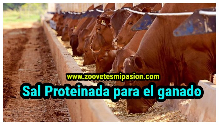 Sal Proteinada para el ganado