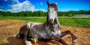 Primeros auxilios ante las Heridas en caballos