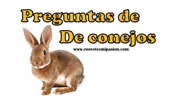 Preguntas sobre conejos