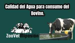 Calidad del Agua para consumo del Bovino
