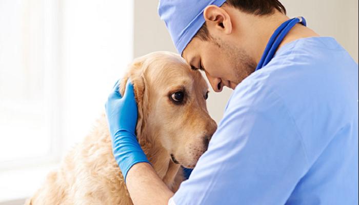 Como serial el mundo sin veterinario