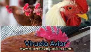 Viruela Aviar