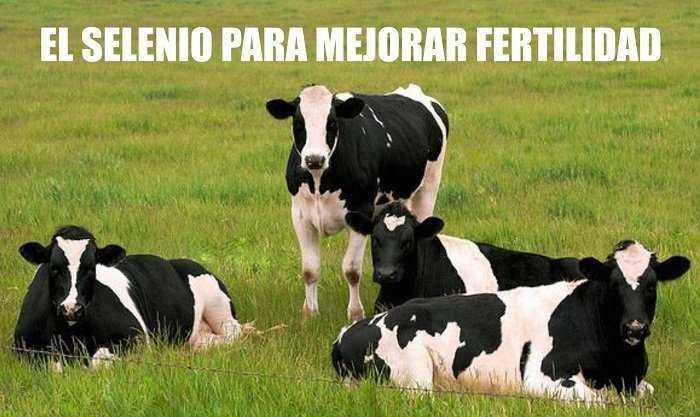 selenio en los abortos de la vacas