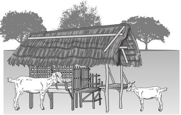Instalaciones para ovinos y caprinos