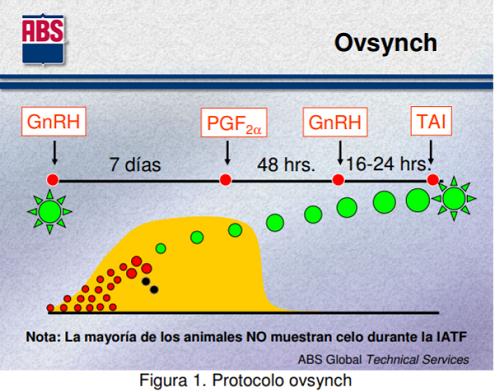 Protocoloovsynch