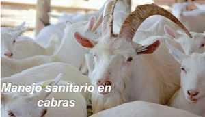 Sanidad en cabras